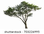 trees isolated on white... | Shutterstock . vector #703226995