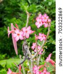 Small photo of Pink adenium in the garden