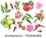 painting watercolor  autumn set ... | Shutterstock . vector #703336384