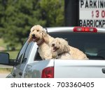 two dogs at the back of a... | Shutterstock . vector #703360405