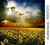 field of sunflower against the...   Shutterstock . vector #70337272