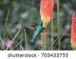 hummingbird | Shutterstock . vector #703433755