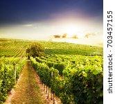 vineyards on the sunset | Shutterstock . vector #703457155