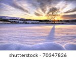 Tree In Snow Scene With...