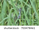 Pair Of  Blue Dragonflies...