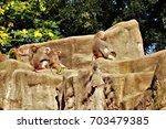baboons. | Shutterstock . vector #703479385
