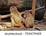 baboons. | Shutterstock . vector #703479409
