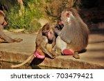 baboons. | Shutterstock . vector #703479421