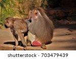 baboons. | Shutterstock . vector #703479439