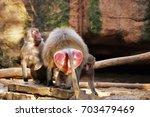 baboons. | Shutterstock . vector #703479469