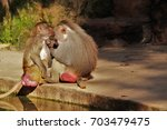 baboons. | Shutterstock . vector #703479475