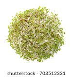 Small photo of Alfalfa Sprout on white background