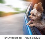 a happy  yorkshire terrier dog... | Shutterstock . vector #703535329