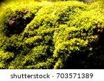 moss in garden | Shutterstock . vector #703571389