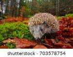 european hedgehog  erinaceus... | Shutterstock . vector #703578754