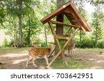 Deer Eating Grass From Feeder...