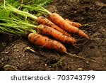 a bunch of fresh carrots with... | Shutterstock . vector #703743799