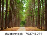 """pine agroforestry at """"suan son... 