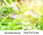 pink flowers and flowers bright ... | Shutterstock . vector #703757134