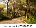 quiet trail through a pine... | Shutterstock . vector #703787539