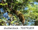 Little Green Fern In Moss Of...