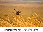 flying buzzard. yellow nature... | Shutterstock . vector #703843195