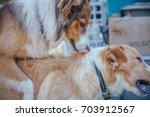 one dog is on top of the other | Shutterstock . vector #703912567