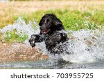 black  dog running with a lot... | Shutterstock . vector #703955725