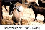 goat herd | Shutterstock . vector #704046361