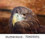 head of a eagle   Shutterstock . vector #70405051