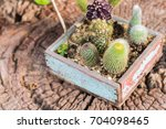 The Many Type Of Cactus In The...