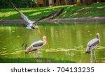 bird painted stork flying... | Shutterstock . vector #704133235