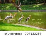 bird painted stork flying... | Shutterstock . vector #704133259