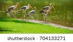 bird painted stork flying... | Shutterstock . vector #704133271