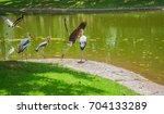 bird painted stork flying... | Shutterstock . vector #704133289