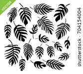 monstera leaves silhouettes... | Shutterstock .eps vector #704154004