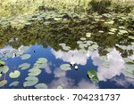 White Lilies In The Pond And...