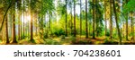 wonderful forest panorama with... | Shutterstock . vector #704238601