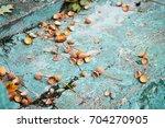 fallen leaves  crashed acorn... | Shutterstock . vector #704270905