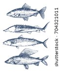 fish set. seafood hand drawn... | Shutterstock .eps vector #704321011