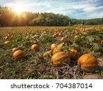 typical styrian pumpkin field ... | Shutterstock . vector #704387014