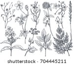 vector collection of hand drawn ... | Shutterstock .eps vector #704445211
