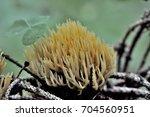 Artomyces Pyxidatus Is A Coral...
