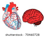 human heart and brain. eps10   Shutterstock .eps vector #70460728
