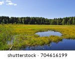 small pond. water reed. water... | Shutterstock . vector #704616199
