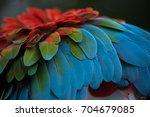 green winged macaw  ara... | Shutterstock . vector #704679085