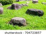 Rock In Grass. Natural Texture...