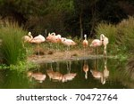 Photo Of Pink Flamingos In The...