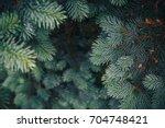 fir tree brunch close up.... | Shutterstock . vector #704748421