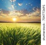 meadow of wheat on sundown....   Shutterstock . vector #704772691